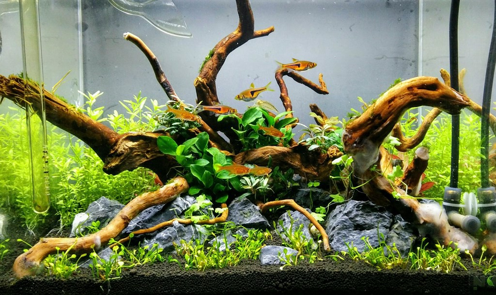 Planted Aquarium Set Up