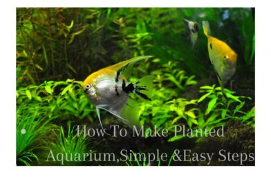 HOW TO SET UP PLANTED AQUARIUM, 7 EASY STEPS..